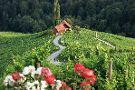 Šerbinek Winery & the Heart-Shaped Wine Road