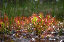 Nature in Colour, Nova Vas, Slovenia