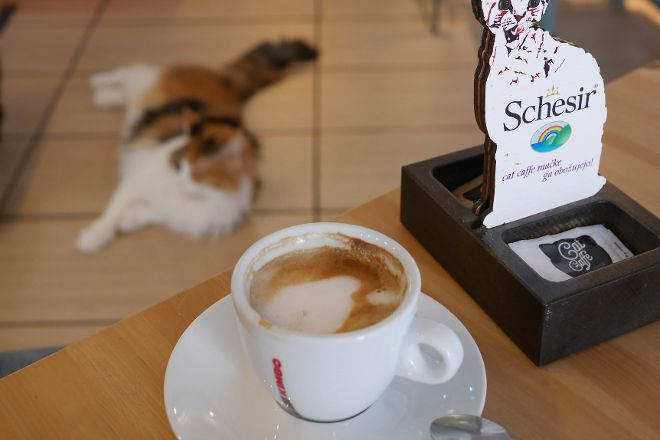 Cat Caffe Ljubljana, Ljubljana, Slovenia