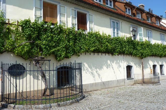 Old Vine House, Maribor, Slovenia