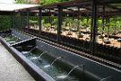 Stellenbosch University Botanical Garden