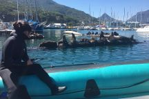 Animal Ocean Seal Snorkeling, Hout Bay, South Africa