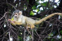 Bush Babies Monkey Sanctuary, Hartbeespoort, South Africa