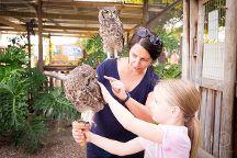Eagle Encounters, Stellenbosch, South Africa, Stellenbosch, South Africa