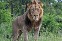 Explore Kruger Safaris