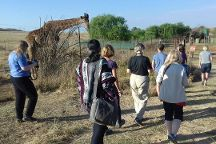 Imbizo Tours and Travel -   Day Tours, Johannesburg, South Africa