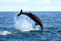 Ivanhoe Sea Safaris, Gansbaai, South Africa