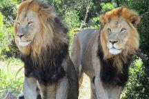 Kakuli Safaris, Colchester, South Africa