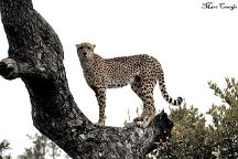 Kruger Flexi Tours - Day Tours, Nelspruit, South Africa