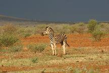 Madikwe Nature Reserve