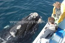 Percy Tours, Hermanus, South Africa