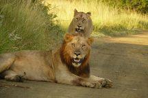 Tim Brown Tours - Durban Safari Tours, Durban, South Africa