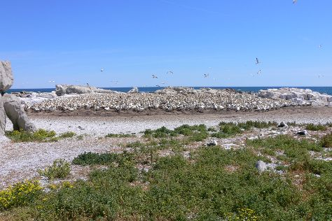 Bird Island Nature Reserve, Lamberts Bay, South Africa