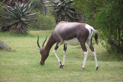 Bontebok National Park, Swellendam, South Africa