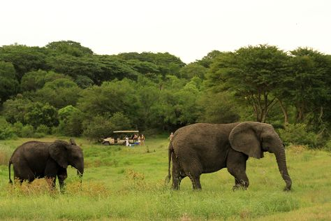 Tembe National Elephant Park, Sihangwane, South Africa