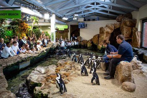 Two Oceans Aquarium, Cape Town Central, South Africa