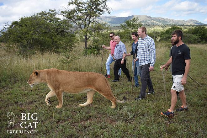 Big Cat Experiences, Bela Bela, South Africa
