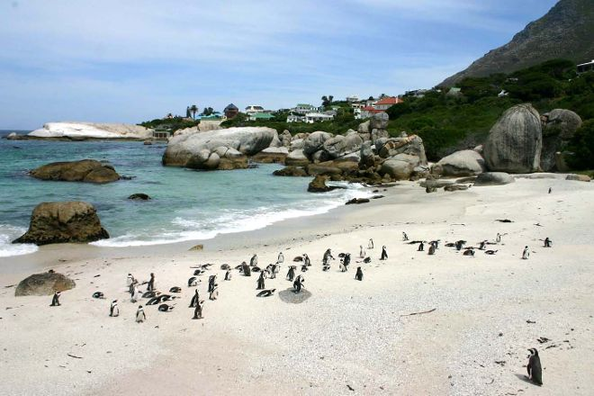 Boulders Beach Penguin Colony, Simon's Town, South Africa