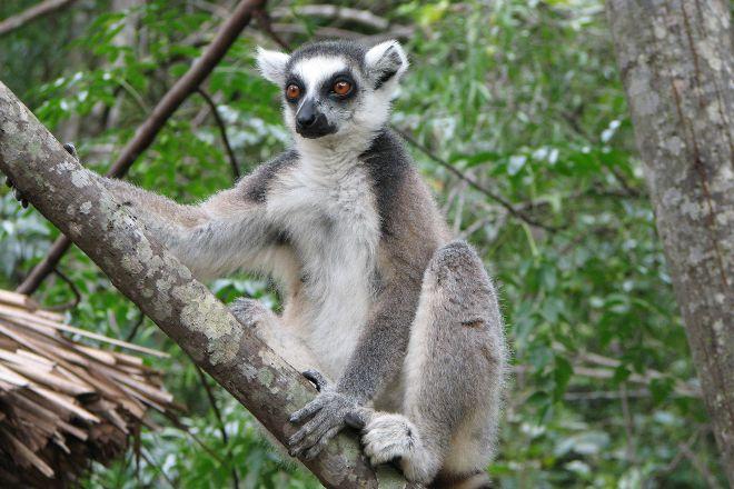 Bush Babies Monkey Sanctuary, Hartbeespoort, South Africa