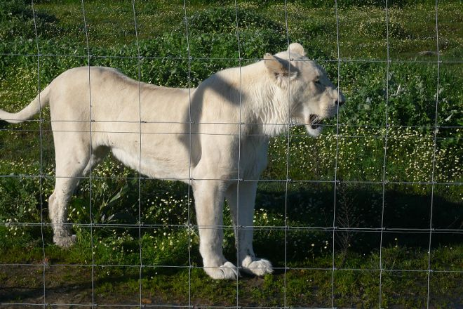 Drakenstein Lion Park, Western Cape, South Africa