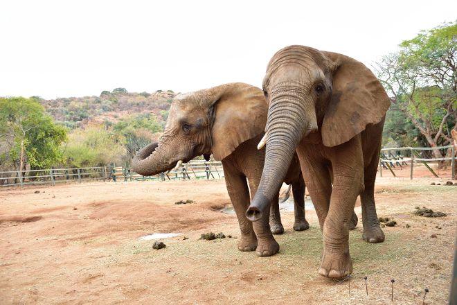 Elephant Sanctuary Hartbeesport Dam, Hartbeespoort, South Africa