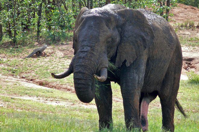 Game drives at Phalaborwa Gate in Kruger National Park, Kruger National Park, South Africa