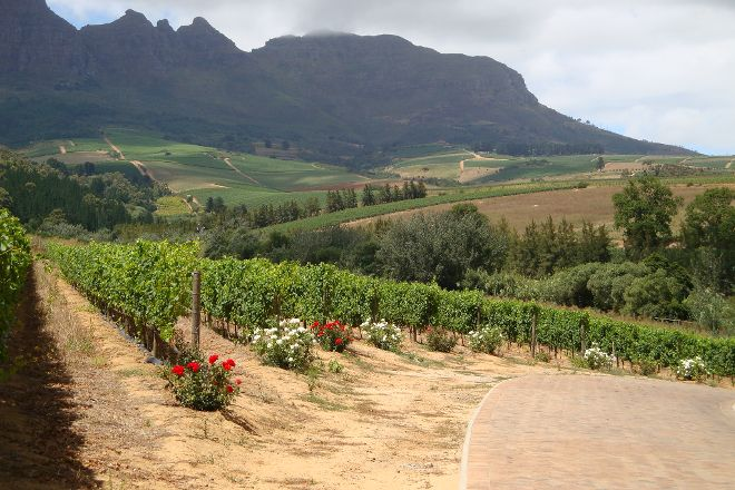 Gourmet Wine Tours, Cape Town Central, South Africa