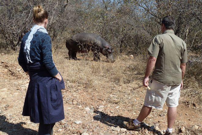 Hippo Jessica, Hoedspruit, South Africa