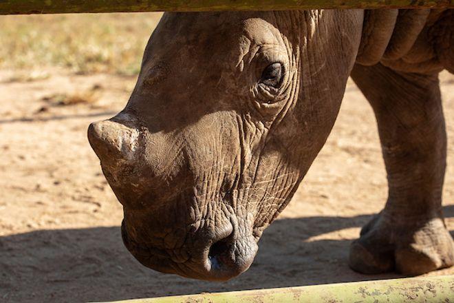 Hoedspruit Endangered Species Centre, Hoedspruit, South Africa