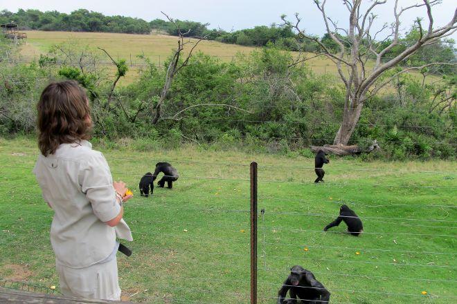 Jane Goodall Chimpanzee Eden Sanctuary, Nelspruit, South Africa