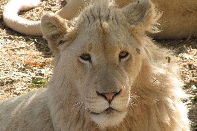 Kalahari Safaris Day Tours, Upington, South Africa
