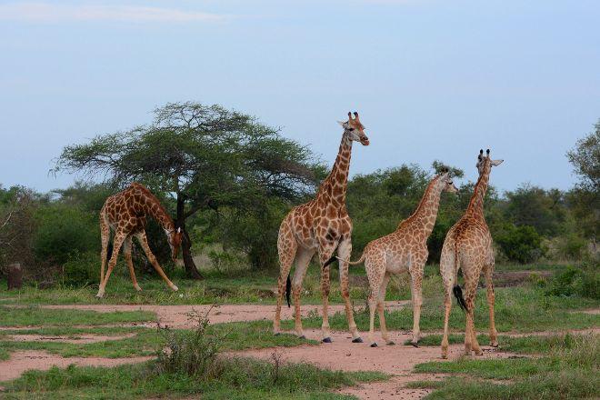 Kruger National Park, Nelspruit, South Africa