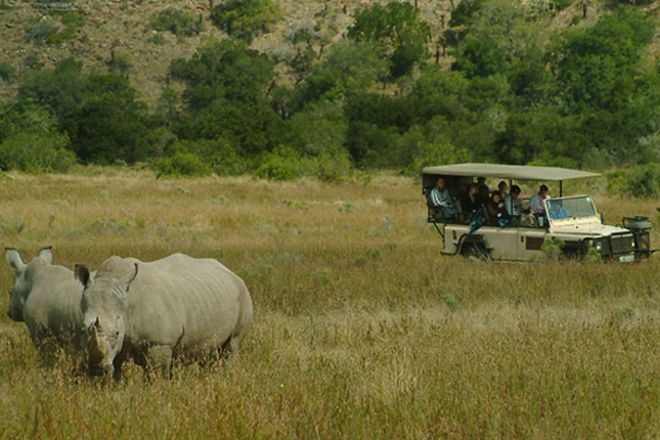 Kwantu Private Game Reserve - Day Visits, Port Elizabeth, South Africa