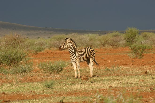 Madikwe Nature Reserve, Zeerust, South Africa
