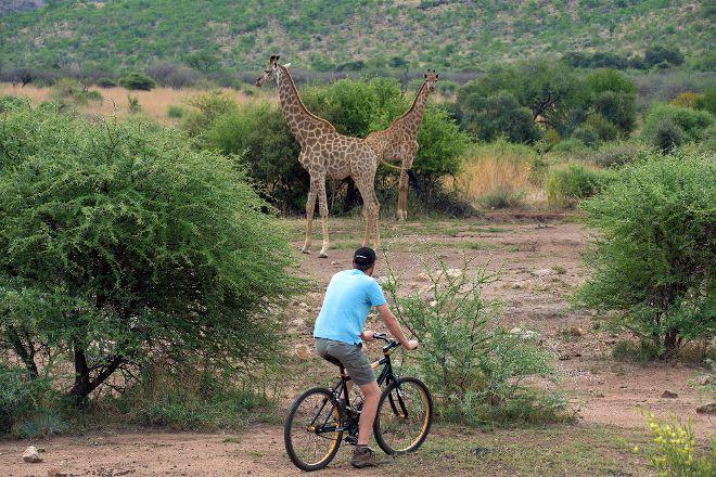 Mankwe GAMETRACKERS, Sun City, South Africa