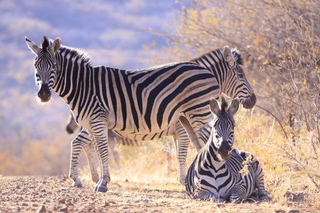 Marakele National Park, Waterberg, South Africa