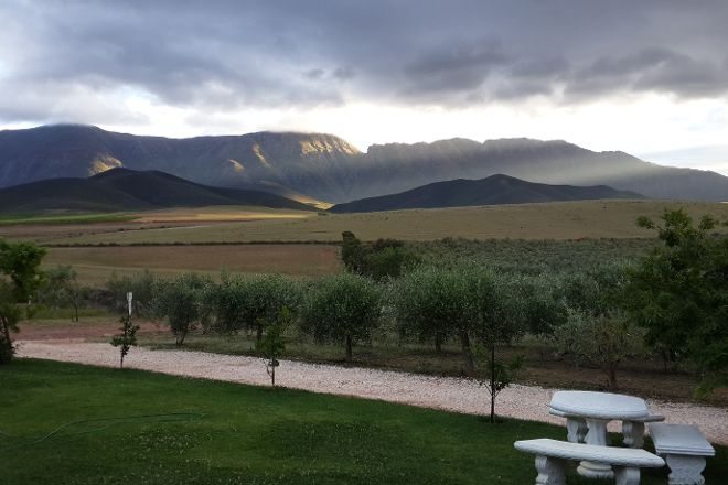 Marbrin Olive Growers, Robertson, South Africa