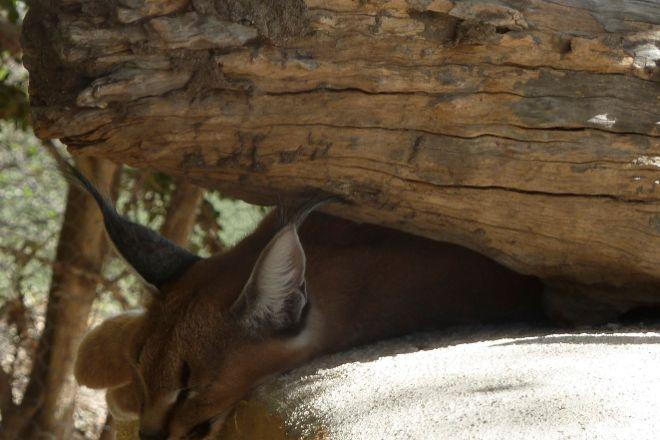 Moholoholo Animal Rehabilitation Centre, Hoedspruit, South Africa
