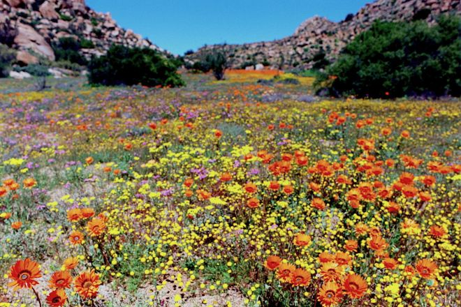 Namaqualand, Northern Cape, South Africa