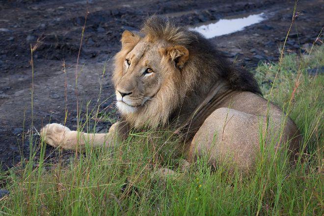 Nambiti Big 5 Private Game Reserve, Ladysmith, South Africa