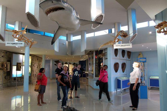 Natal Shark Board, Durban, South Africa