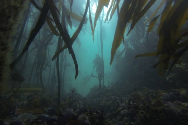 Neptune's Divers and Cruises Hermanus, Hermanus, South Africa