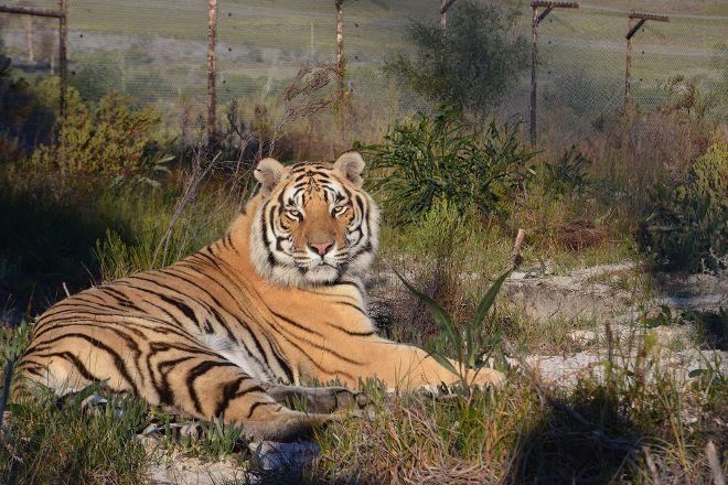 Panthera Africa - Big Cat Sanctuary, Stanford, South Africa