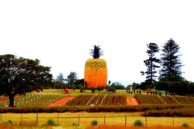 The Big Pineapple, Bathurst, South Africa