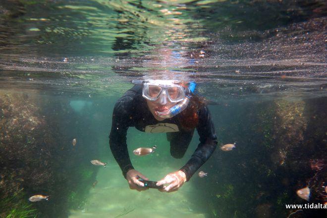 Tidal Tao Snorkeling Safaris, Ballito, South Africa