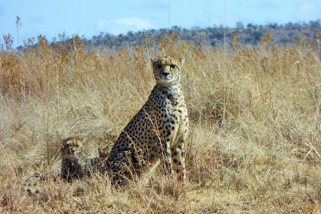 Welgevonden Nature Reserve, Vaalwater, South Africa