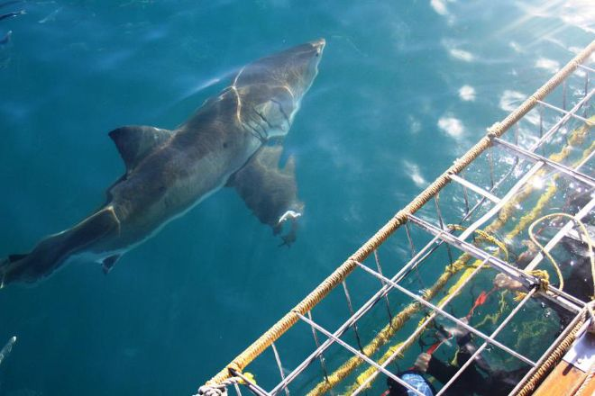 White Shark Projects, Gansbaai, South Africa