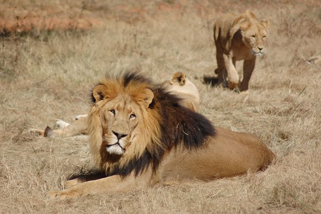 Wildlife Safaris Day Tours, Johannesburg, South Africa