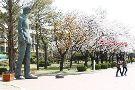 Yeungnam University Museum