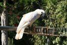 Zoo Tenerife Monkey Park